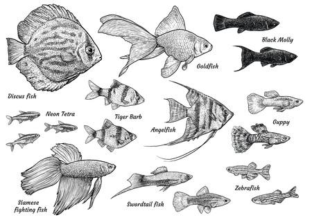 Kolekcja ilustracji ryb akwariowych, rysunek, grawerowanie, atrament, grafika liniowa, wektor.