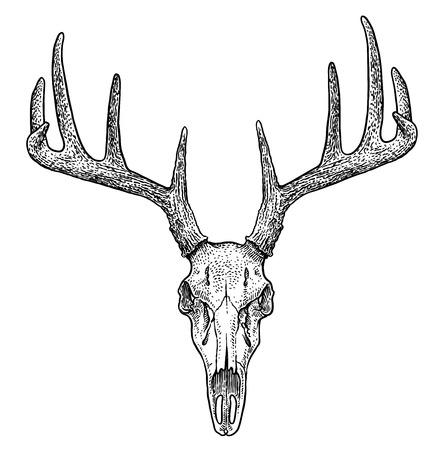 Deer skull illustration, drawing, engraving, ink, line art, vector