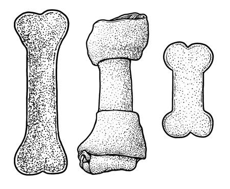 Dog chewing bone illustration, drawing, engraving, ink, line art, vector