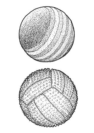 Pet ball illustration, drawing, engraving, ink, line art, vector