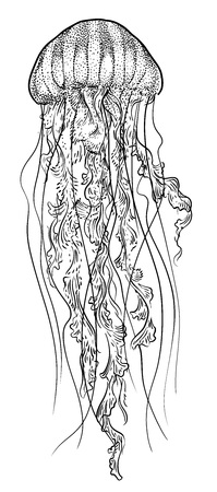 Orange jellyfish illustration, drawing, engraving, ink, line art, vector