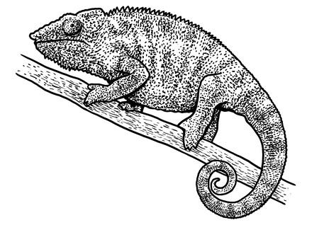 Chameleon illustration Ilustrace