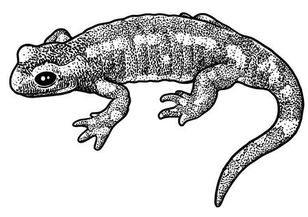 Ilustração de salamandra de fogo