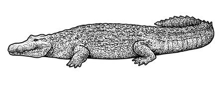 Crocodile illustration Illusztráció