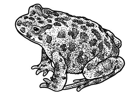 European green toad illustration Illustration