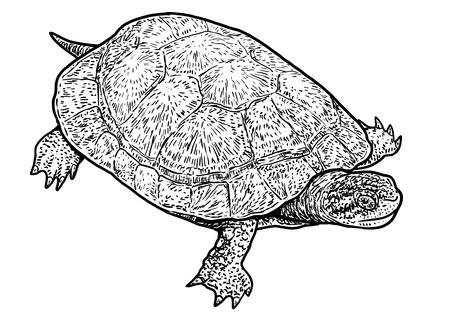 European pond turtle illustration 일러스트