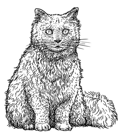 Persian cat illustration, drawing, engraving, ink, line art, vector illustration.