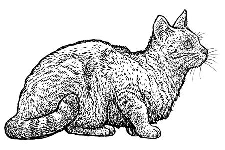 Sitting tabby cat illustration, drawing, engraving, ink, line art, vector illustration.