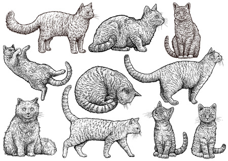 Cat collection illustration, drawing, engraving, ink, line art, vector illustration.
