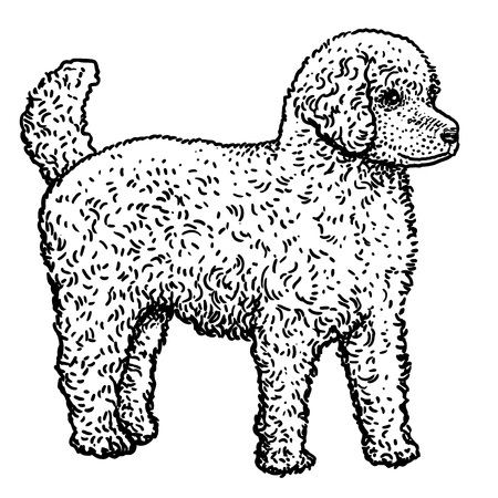 1098 Dog Groom Stock Vector Illustration And Royalty Free Dog Groom