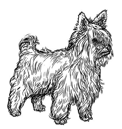 Yorkshire terrier illustration, drawing, engraving, ink, line art, vector Illustration