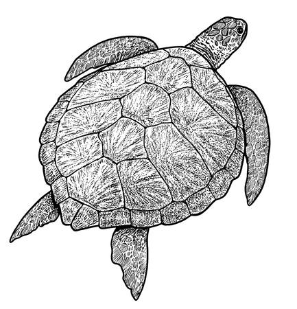 Groene zeeschildpad handgetekende vectorillustratie.