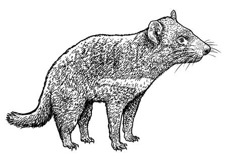 Tasmanian devil hand-drawn Vector illustration isolated on white background.