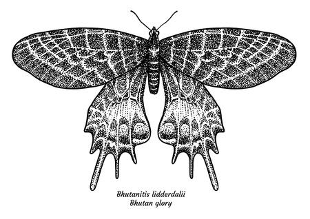 Bhutanitis lidderdalii, Bhutan glory illustration. vector Иллюстрация