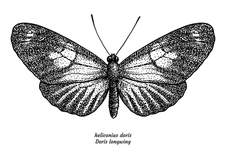 Heliconius doris, doris longwing, illustration, drawing, engraving, ink, line art, vector Ilustração