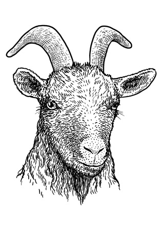 Goat head portrait illustration engraving ink line art vector