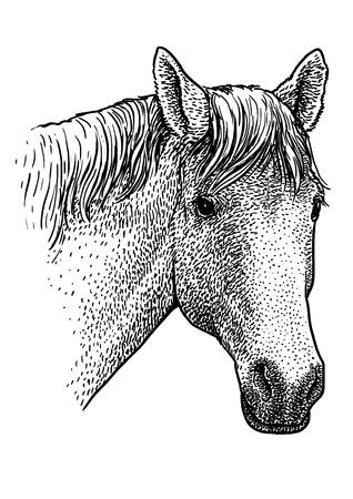 Horse head portrait illustration engraving ink line art vector