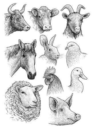 Domestic farm animals head collection collection illustration engraving ink line art vector