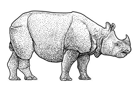 Indian rhinoceros illustration, engraving, ink, line art, vector Illustration