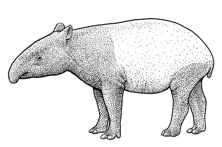 Malayan tapir illustration engraving ink line art vector Illustration