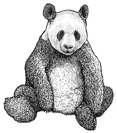Giant Panda illustration, engraving, ink, line art, vector