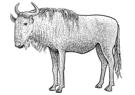 Gnu, blue wildebeest illustration, drawing engraving, ink, line art, vector Illustration
