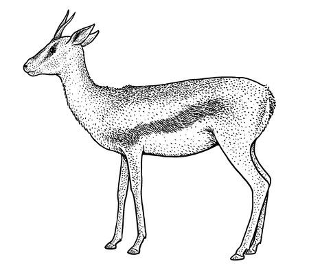 Thomson's gazelle illustration, engraving, ink, line art, vector