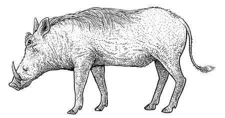 Warthog illustration drawing engraving ink line art vector
