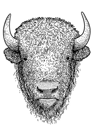 Bison illustration drawing engraving ink line art vector