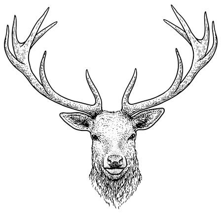 Deer head illustration drawing engraving ink line art vector