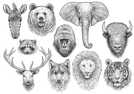 Animal head collection illustration engraving ink line art vector