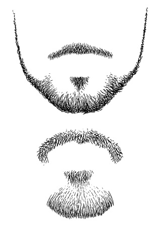 Beard illustration, engraving, ink, line art, vector