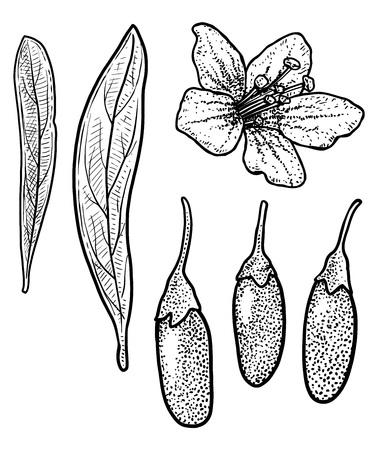 Goji berry illustration drawing engraving ink line art vector Ilustração