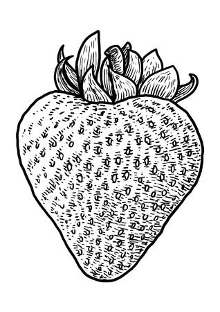 Strawberry illustration drawing engraving ink line art vector Ilustração