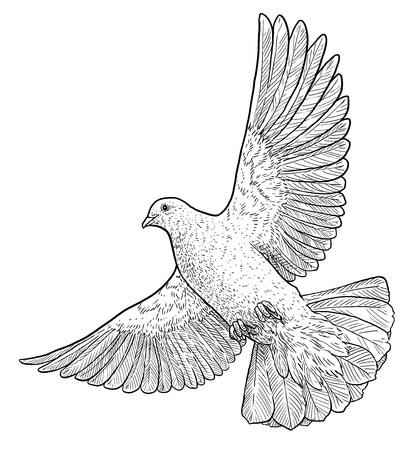 Flying dove illustration, engraving, ink, line art, vector