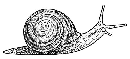 Garden snail illustration engraving ink line art vector Ilustração