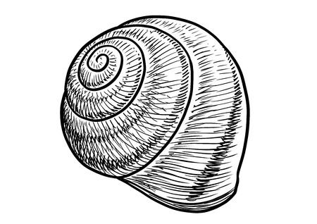 Garden snail shell illustration, engraving, ink, line art, vector Ilustração