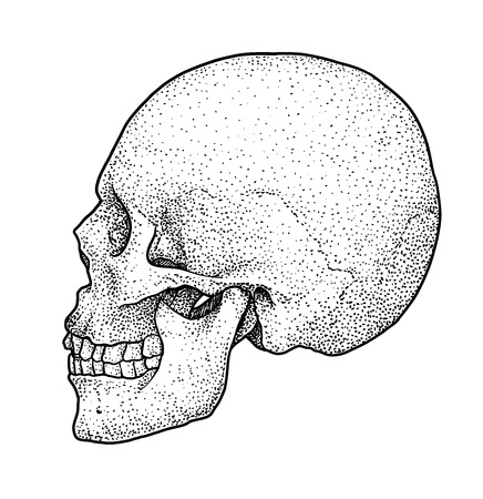 Skull drawing, engraving, ink, line art, vector Ilustracja