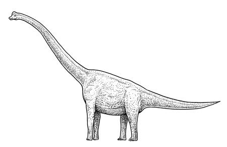 Brachiosaurus illustration drawing engraving ink line art vector Illustration