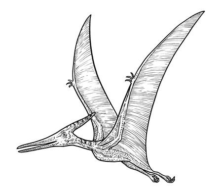 Pteranodon illustration, engraving, ink, line art, vector Illustration