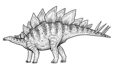Stegosaurus illustration drawing engraving ink line art vector