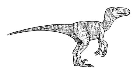 Velociraptor illustration drawing engraving ink line art vector