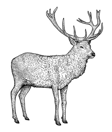 Deer illustration drawing engraving ink line art vector Ilustração