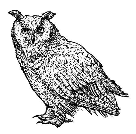 Owl illustration drawing engraving ink line art vector