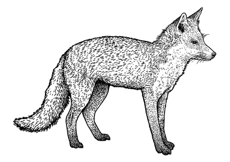 Fox illustration drawing engraving ink line art vector