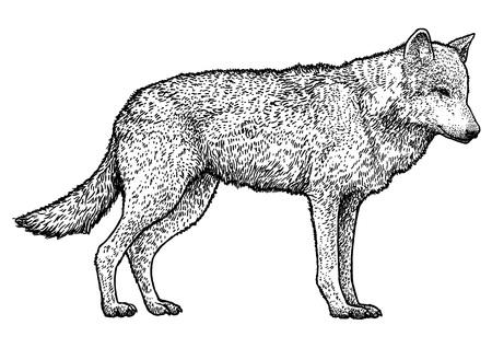Loup illustration dessin gravure encre ligne art vecteur Vecteurs