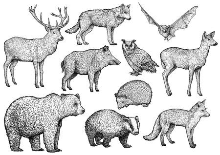 Bosgravure, gravure, inkt, zeer fijne tekeningen, vector Vector Illustratie