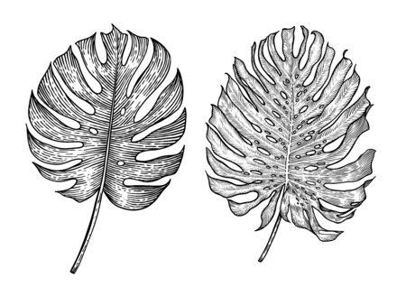 Monster leaf illustration, drawing, engraving, ink, line art, vector Imagens - 137230158