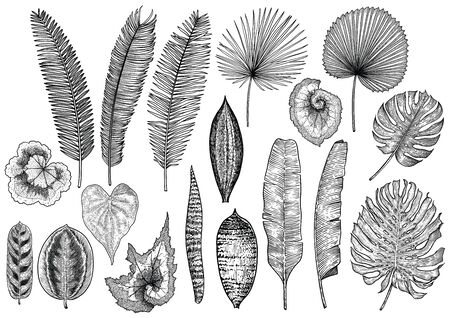 Illustration de feuille tropicale, dessin, gravure, encre, dessin au trait, vecteur Vecteurs