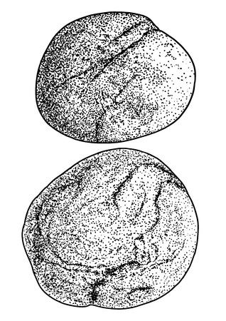 Rock pebble illustration drawing engraving ink line art vector Illustration